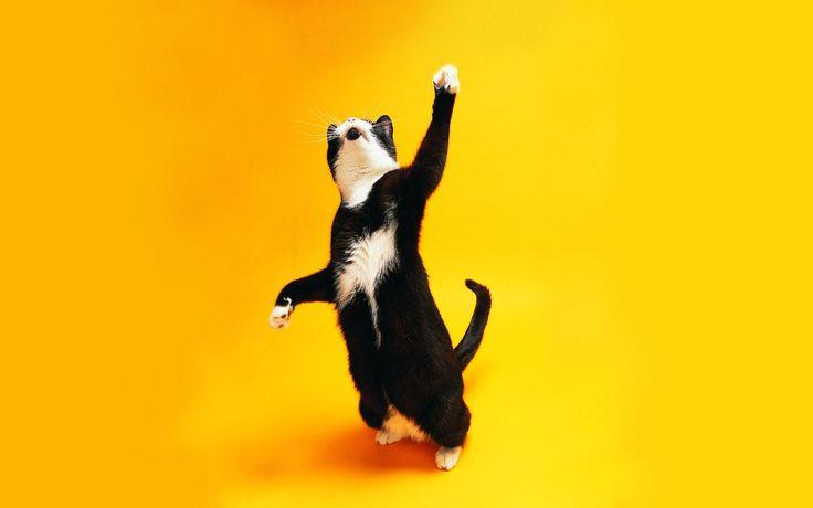 Котенок, кот, кошка, желтый, фон обои, картинки, фото