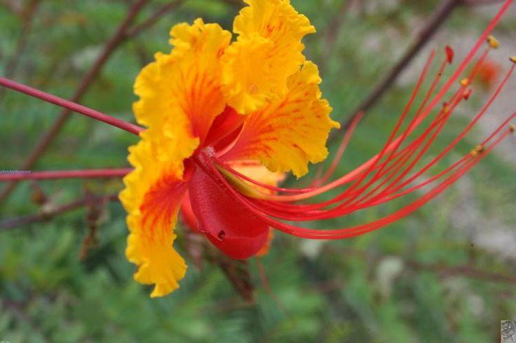 Google Image Result for http://www.taltopia.com/media/119/119092/exotic-flower-4.jpg: Magic Flowers, Natural Beautiful, Strange Flowers, Flowers Small, Flowers Power, Beautiful Flowers, Flowers Big, Exotic Flowers, Colors Flowers