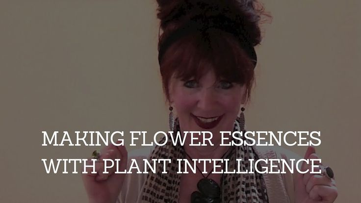 Making Flower Essences with Plant Intelligence