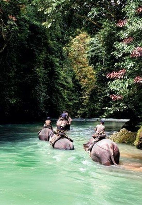 Elephant Trekking, Koh Chang, Thailand - such beautiful majestic animals & such an amazing experience #destinationinspiration...x