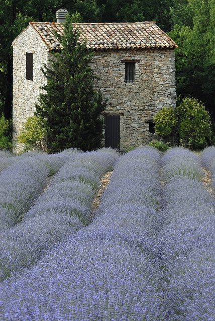 Lavender fields in Provence...this is a softer hue of the fragrant herbal…