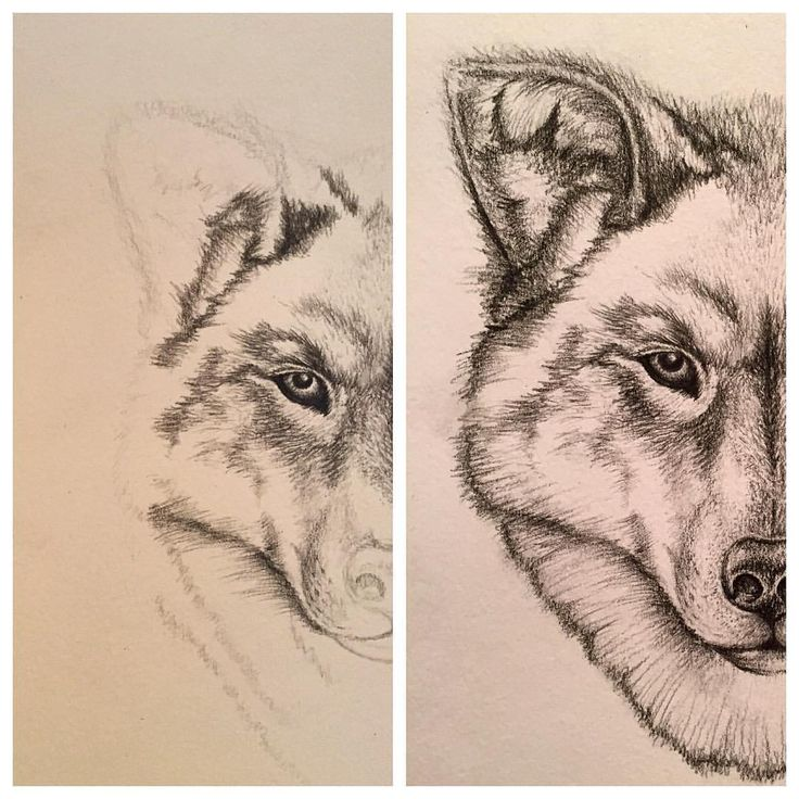 Wolfie  I don't draw in pencil very often, but I do love it. Sketch process from 2014