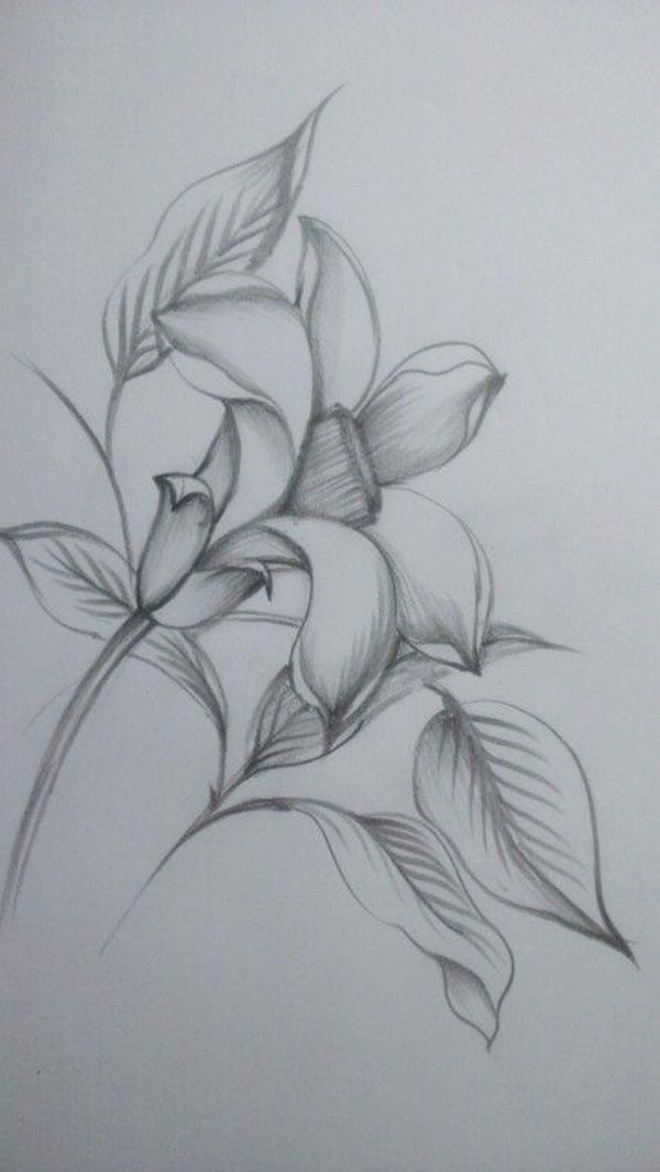 50 Easy Flower Pencil Drawings For Inspiration Pencil Drawings