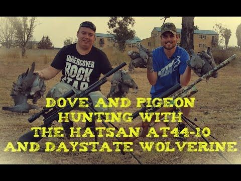 Dove and Pigion Hunting with the Daystate Wolverine and Hatsan AT44-10