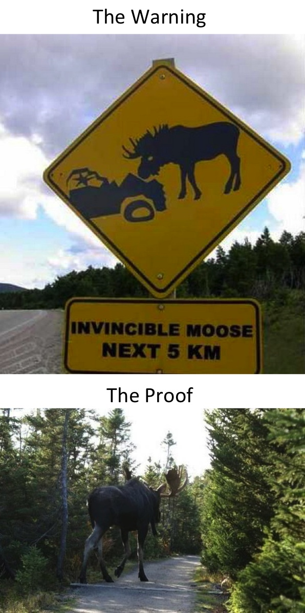 Meanwhile In Canada... is this real!? holy cow... moose.