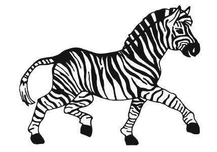 zebra babysit