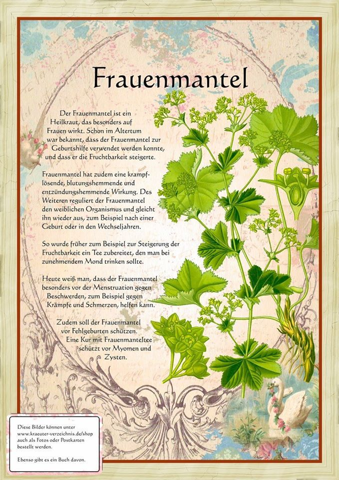 Frauenmantel http://www.kraeuter-verzeichnis.de/