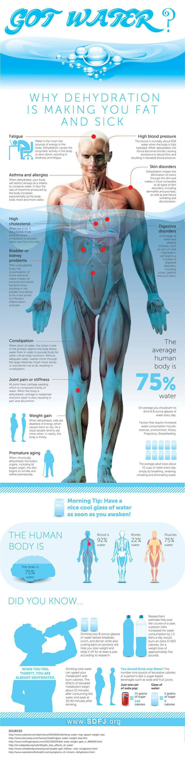 Why Dehydration is Making You Fat And Sick – InfographicLife Advancer