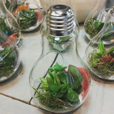 Mini plantjes in een lamp