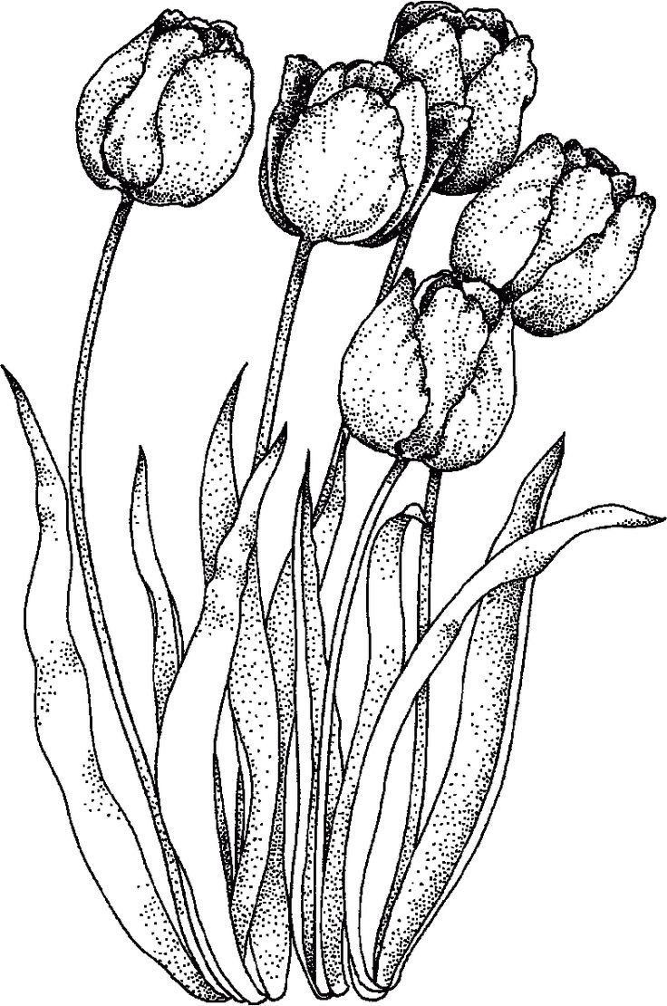 Realistic Tulip Coloring Sheet Nursing Home Residents