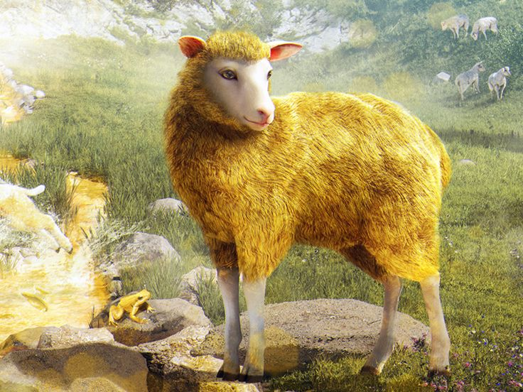 Gold Sheep by Andrew Gusev