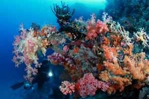 diver corals Raja ampat