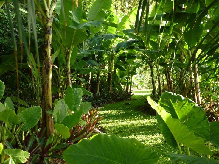 Caribbean garden by Tom Stuart Smith