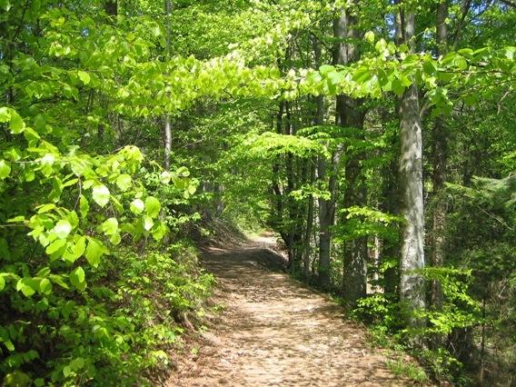 Böhmerwald im Frühling