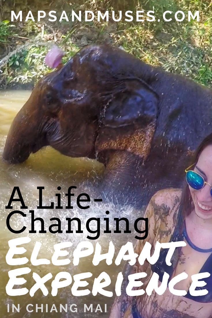 When you're in Thailand, seeing elephants is a must! If you want to visit an ethical elephant sanctuary, check out my life-changing elephant experience. Read More about it here: https://www.mapsandmuses.com/life-changing-elephant-experience-chiang-mai/ | Asia Travel | Chiang Mai | City Guide | Elephants | Elephant Sanctuary Thailand | Thailand Travel | Elephant Sanctuary Chiang Mai