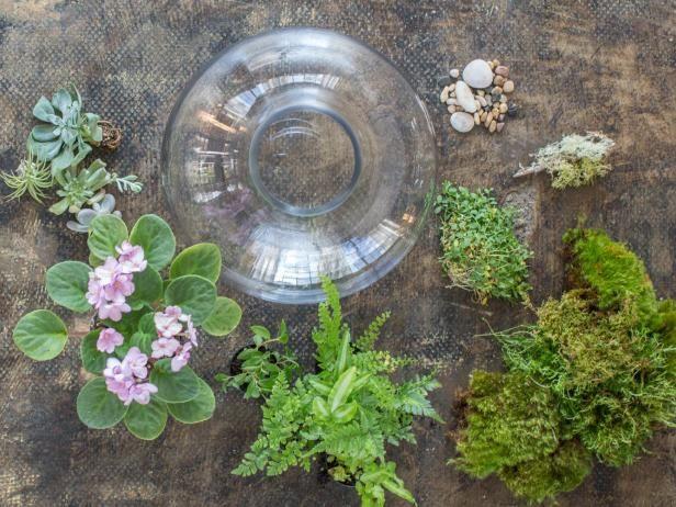 Choosing Terrarium Plants Making a terrarium is even easier with this helpful guide to choosing terrarium plants.