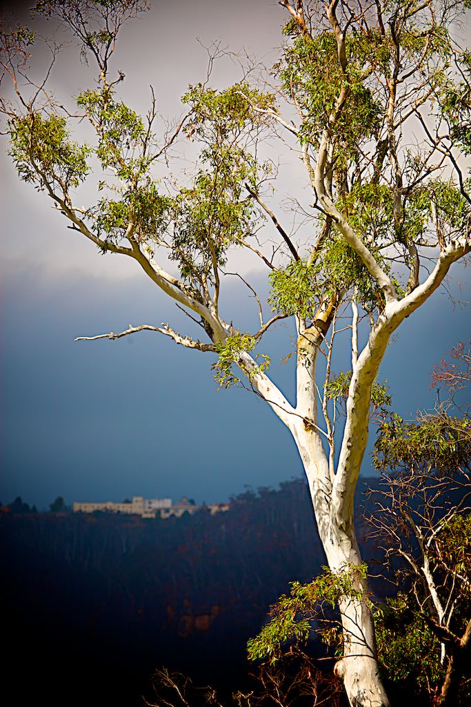 Gum tree under the Hydro Majestic Hotel - Megalong Valley - www.electronicswagman.com.au
