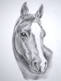 Image result for how to draw a horse head