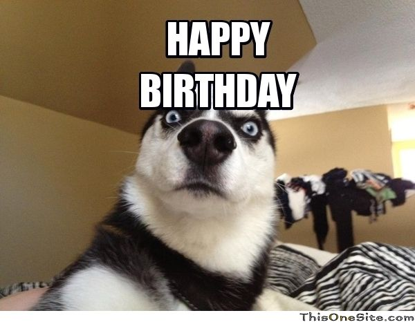 funny birthday meme dog - Google Search