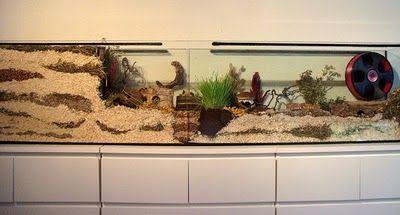 Hamster aquarium cage - Naturnahe Hamstergehege: 240 x 40 Doppelaquarium für Dsungi Ivy