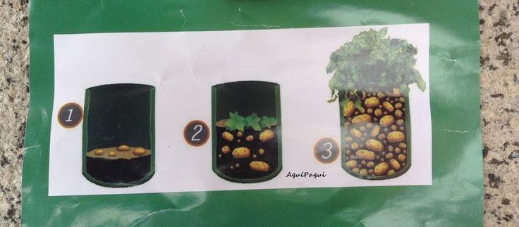 Cultivar patatas en sacos | Plantas