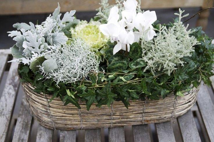 Blumenarrangement aus Efeu, Alpenveilchen, Silberblatt, Silberdraht und Zierkohl