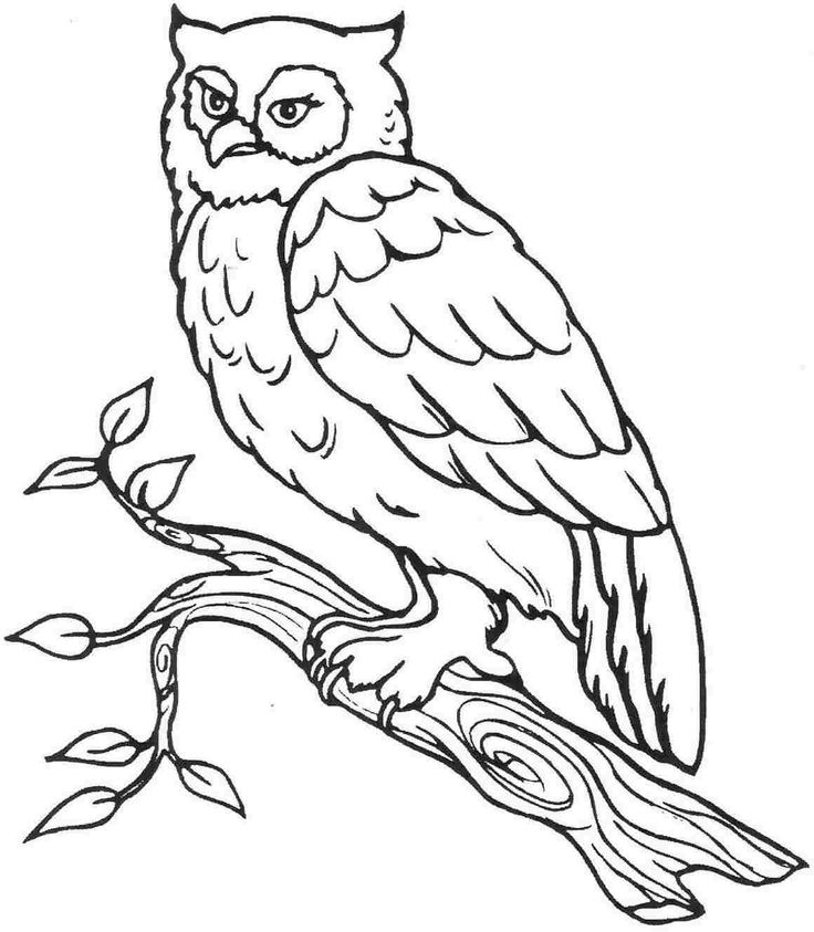 printable animal owl colouring pages for kindergarten
