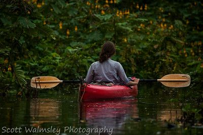 Kayak in the jungle