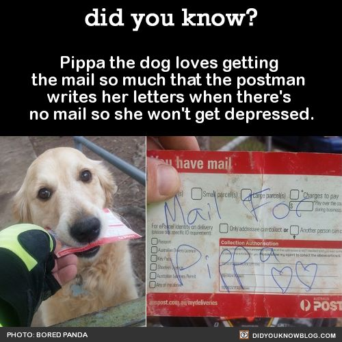 Pippa the dog loves getting the mail so much that the postman writes her letters when there's no mail so she won't get depressed. Source Source 2