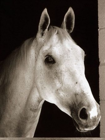 A Love Like Ours features Meg Porter's favorite racehorse, a Thoroughbred named Silver Leaf.  He's a dapple gray and has coloring similar to Desert Orchid (April 11, 1979 – November 13, 2006), affectionately known as Dessie, an English racehorse. The gallant grey achieved iconic status within National Hunt racing, where he was much loved by supporters for his front-running attacking style, iron will and extreme versatility.