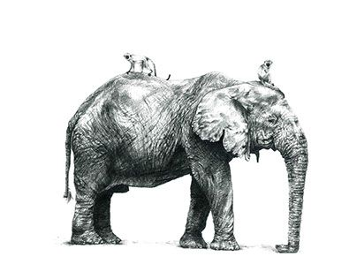 """Check out new work on my @Behance portfolio: """"Giants of Wild Africa"""" http://be.net/gallery/57562171/Giants-of-Wild-Africa pencil illustration , elephants"""