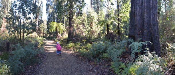 Find out everything you need to know for a day out in Marysville with the kids, checking out a hiking trail, a park, and a waterfall.
