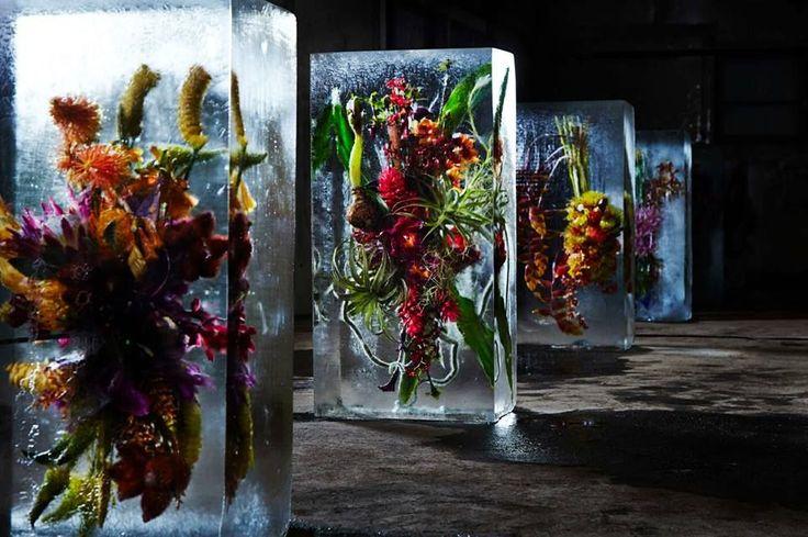 L'artista che rinchiude i fiori in blocchi di ghiaccio | The Creators Project