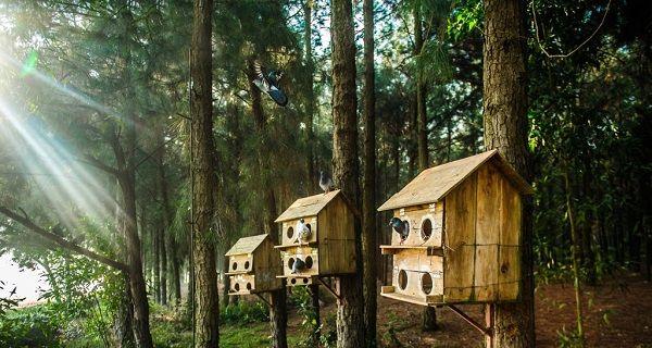 Flamingo Đại Lải Resort - khu nghỉ dưỡng 5 sao cao cấp chỉ cách Hà Nội 45km - Noitoiseden.com