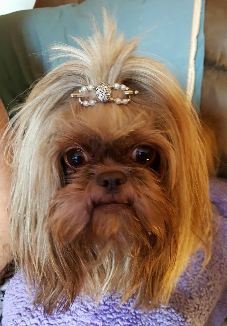How cute is this Tree of Life flexi hair clip on a dog?! Make your puppy the prettiest of the pack with accessories from Lilla Rose!