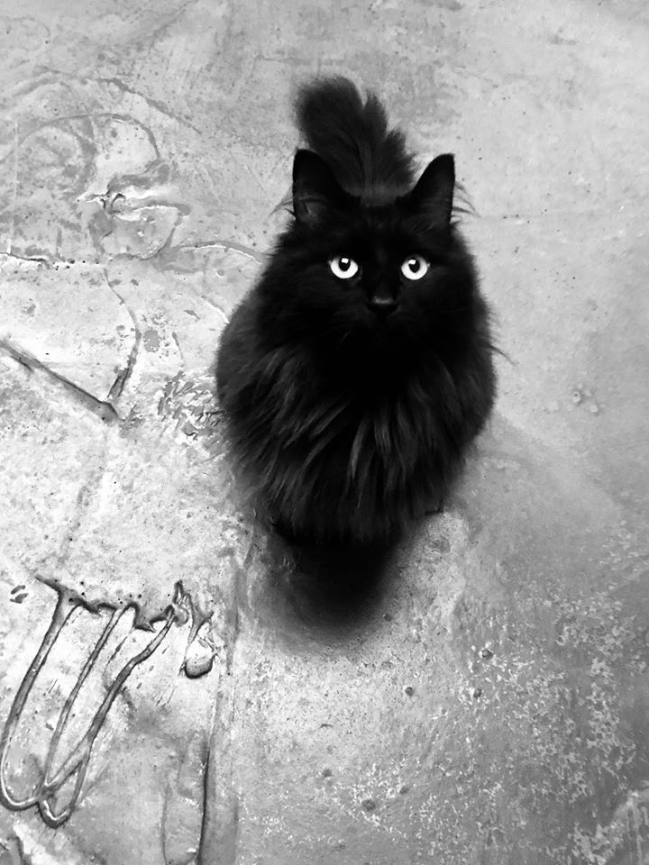 My Supermodel Cat Aura With Images Beautiful Cats Funny Cats