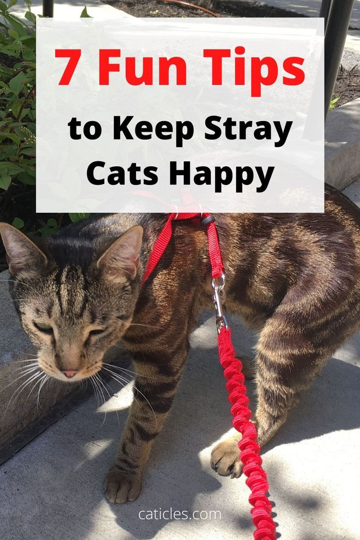 How To Keep A Cat Entertained In An Apartment Pro Tips Stray Cat Cats Indoor Cat