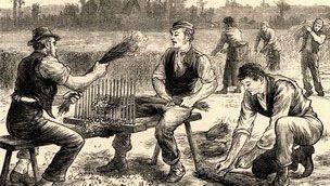 Northern Irishmen working the flax in the fields.