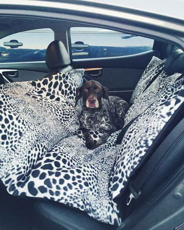 Or make a car hammock for a larger pooch.