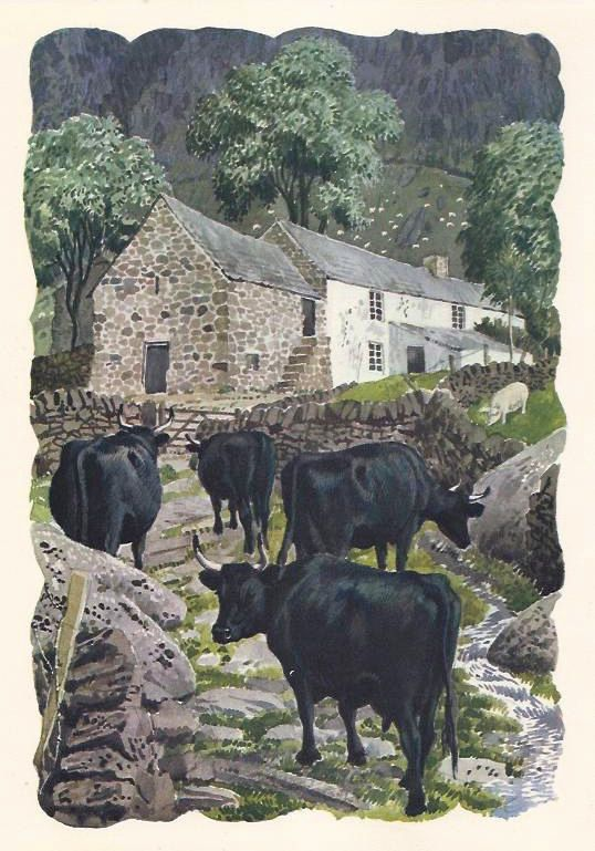 Welsh black cattle on a welsh hill farm, painting by Charles Tunnicliffe.