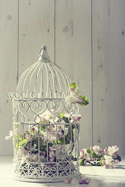 Outdoor decor, birdcage and dreamy cottage cravings