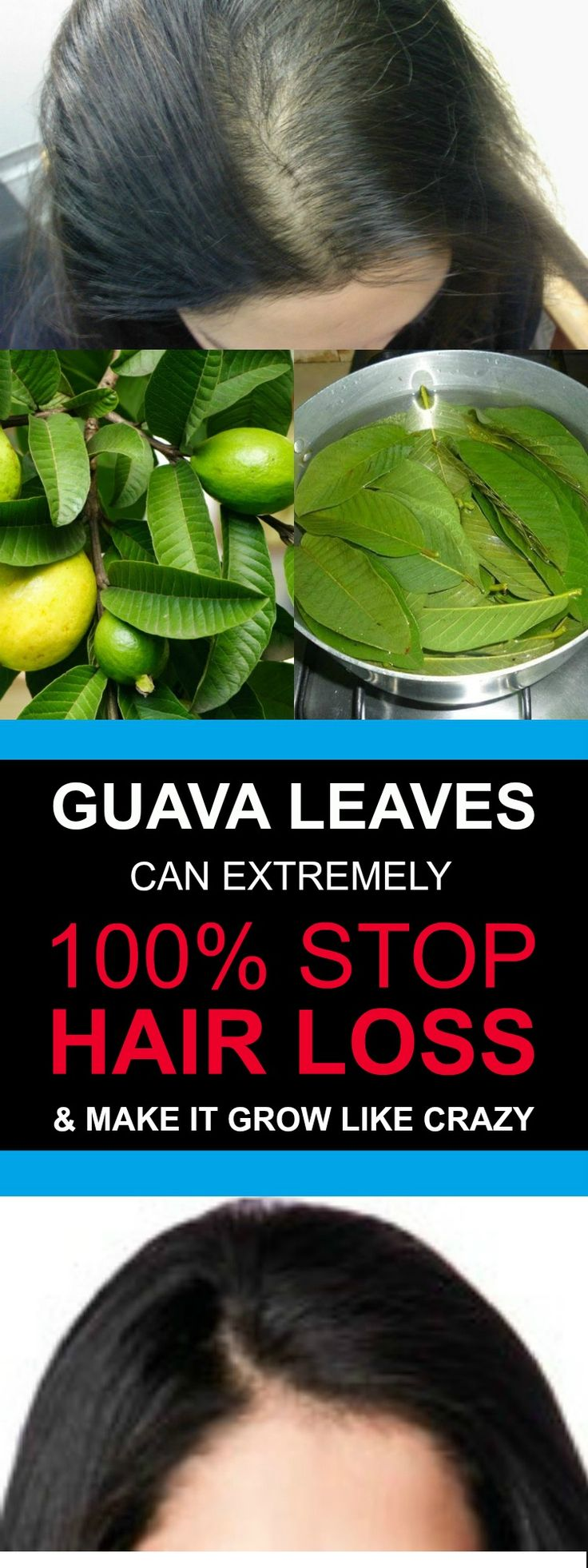GUAVA LEAVES CAN EXTREMELY 100% STOP HAIR LOSS AND MAKE IT GROW LIKE CRAZY1