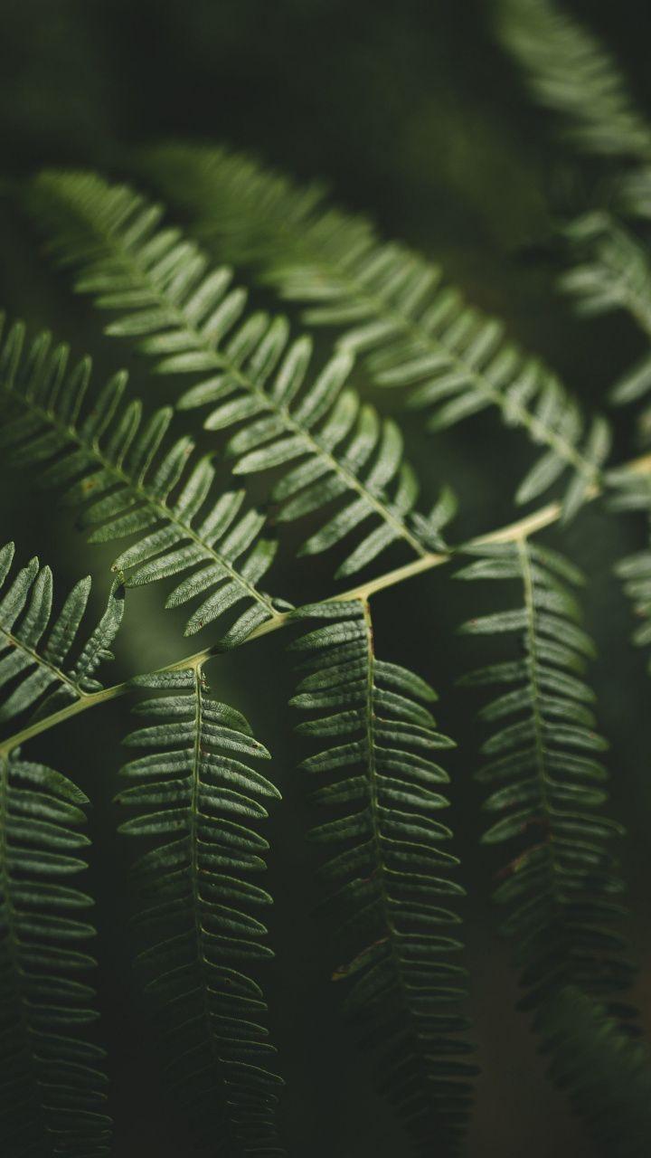 Small Blur Portrait Green Leaves 720x1280 Wallpaper Wallpaper Free Hd Wallpapers Mountain Wallpaper