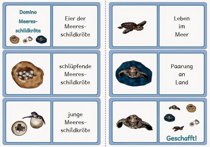 Die besten 25 frosch lebenszyklen ideen auf pinterest lebenszyklen lebensweg handwerk und - Frosch auf englisch ...