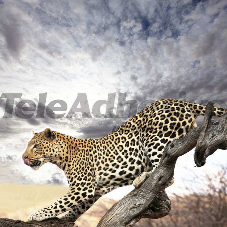Papier peint vinyle Cheetah