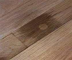 Black urine stains and stain wood on pinterest for How to remove black urine stains from hardwood floors