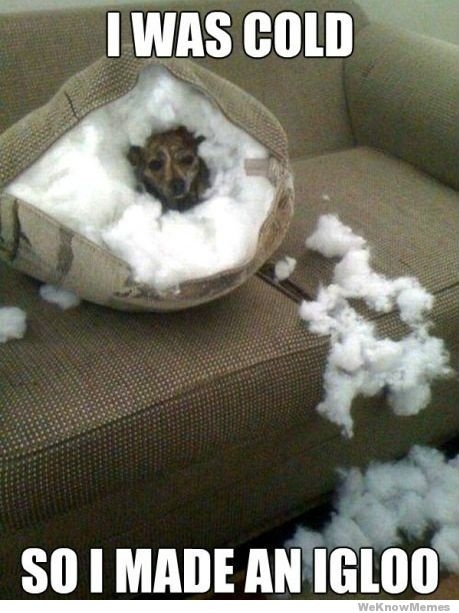 yes, my dogs would do this...