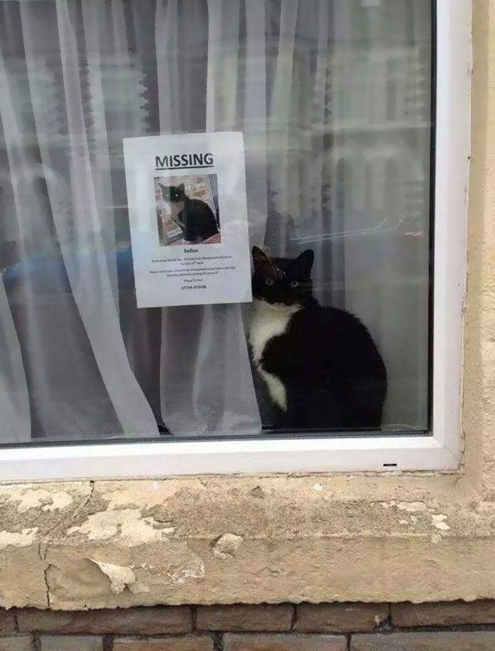 Missing Cat Found Sitting Next To Its Own Missing Cat Poster | via @laughingsquid