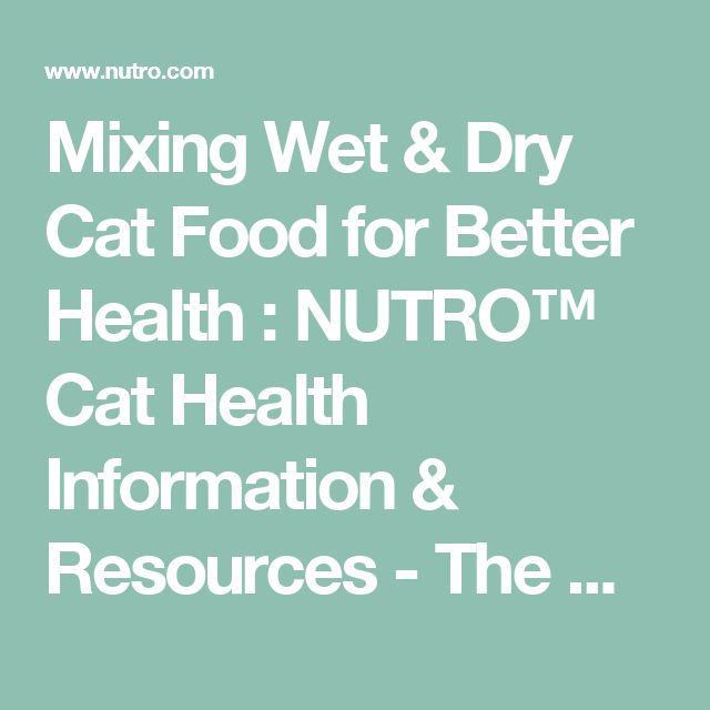 Mixing Wet & Dry Cat Food for Better Health : NUTRO™ Cat Health Information & Resources - The Nutro Company