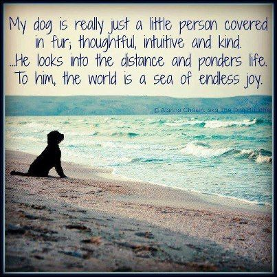 My dog...